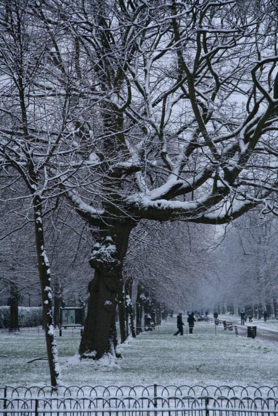 Hyde Park Covered in Snow