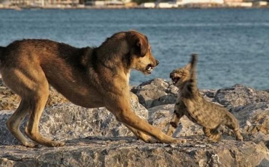 catdogfight